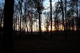 Canon EOS M bos tegenlicht 259x173