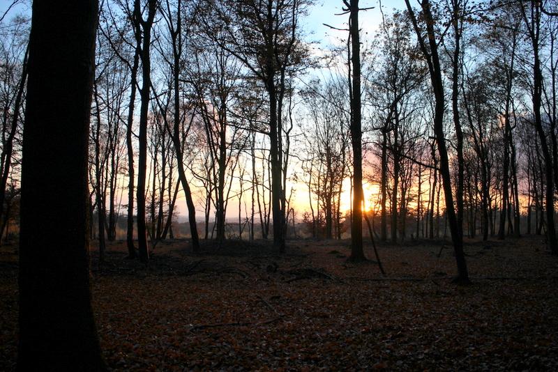 Canon EOS M bos tegenlicht ingevuld
