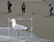 foto bewerken slim selecteren