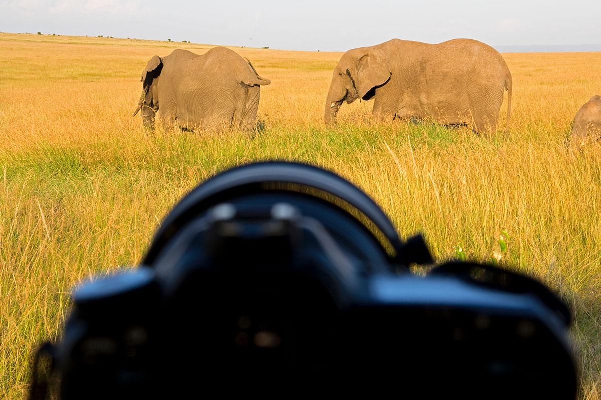 Welke-lens-voor-welke-foto-sport-vogels-dieren