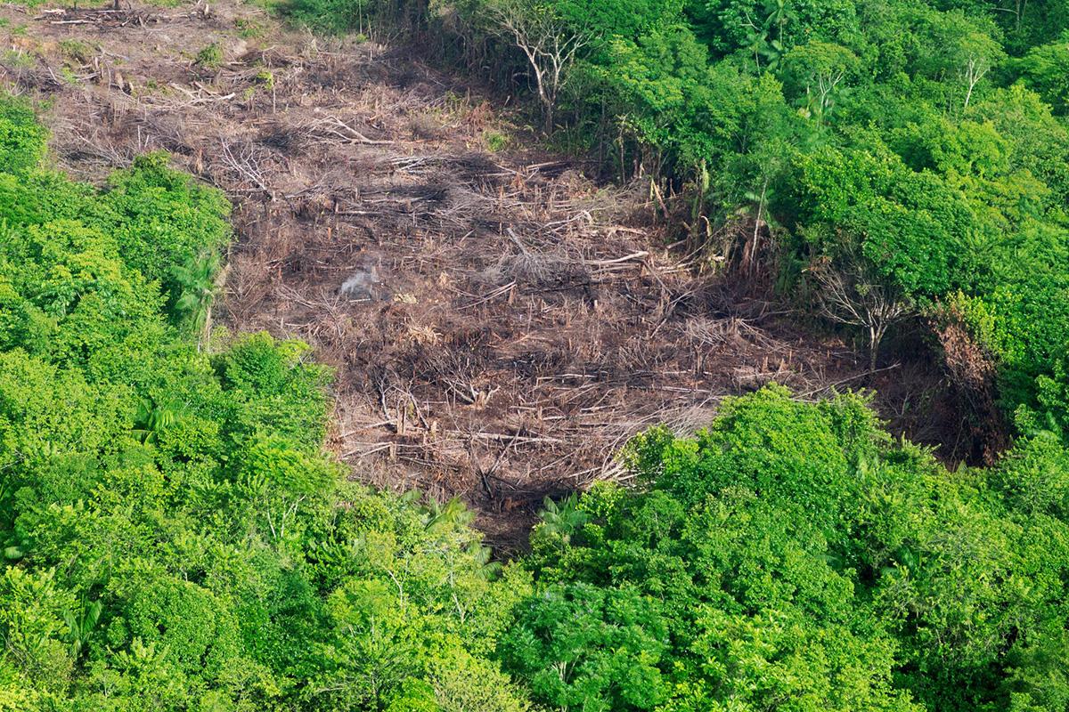 ontbossing-oerwoud