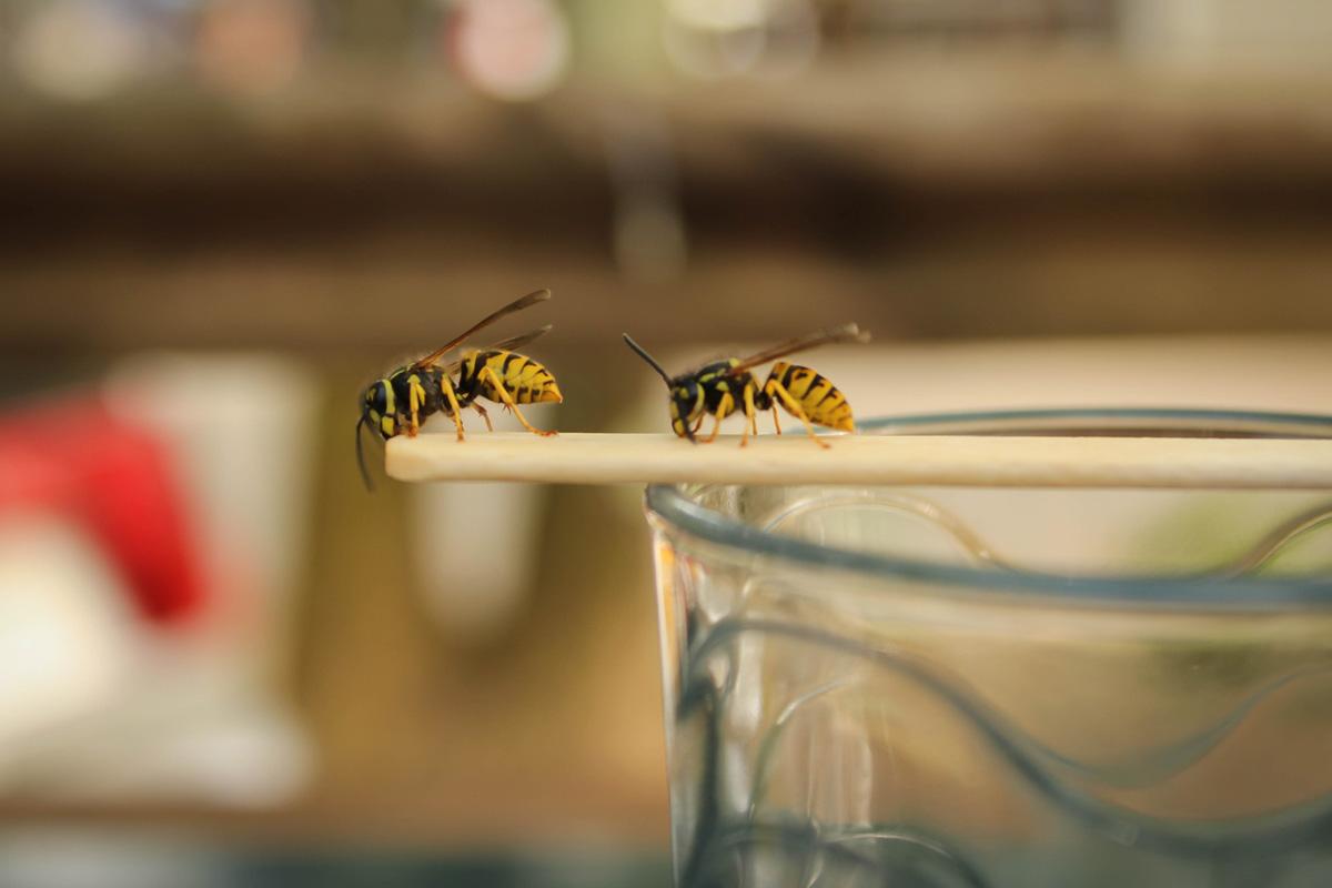 Muizen Bestrijden Forum : Insecten bestrijden in en rondom huis consumentenbond