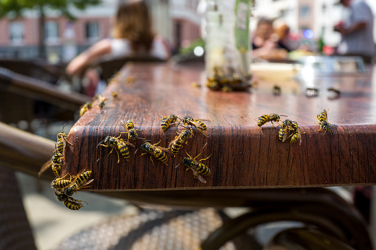 wespen-op-tafel