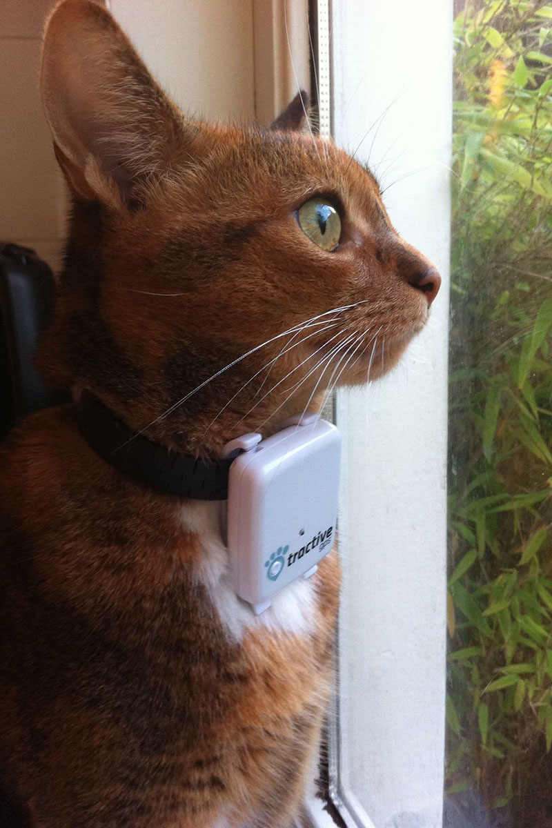 gps pet tracker kat